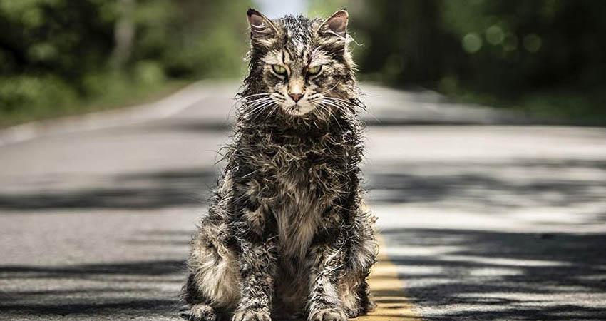 فیلم Pet Sematary