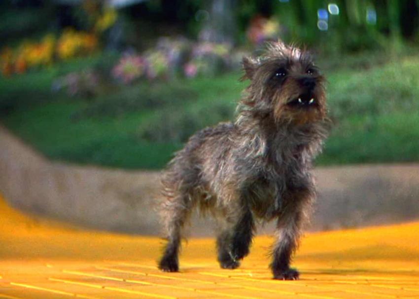 سگها در سینما توتو سگ جادوگر شهر از